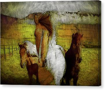 Plateau Ponies Canvas Print by Bellesouth Studio