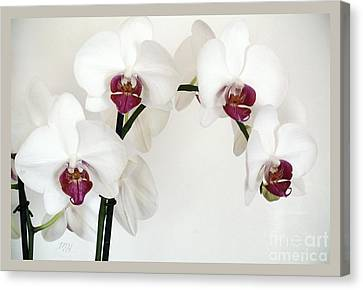 Platnum Beauty Orchids Canvas Print by Marsha Heiken