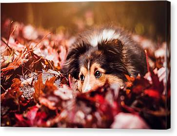 Playful Autumn Dog Canvas Print