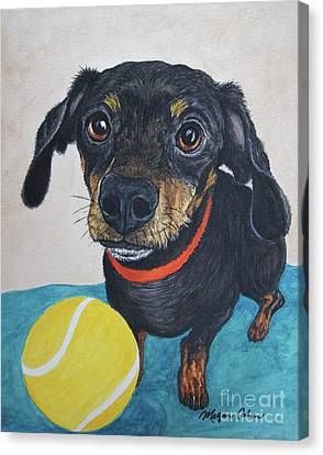 Playful Dachshund Canvas Print