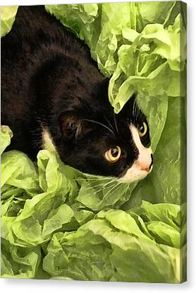 Playful Tuxedo Kitty In Green Tissue Paper Canvas Print by Kathy Clark