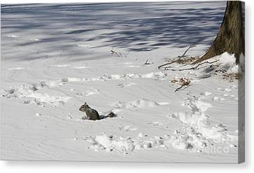 Playing In The Snow Canvas Print