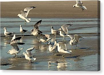 Playtime For Gulls Canvas Print by Rosanne Jordan