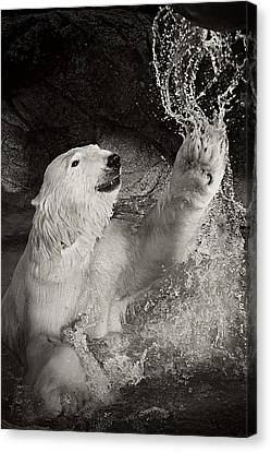Canvas Print featuring the photograph Playtime by Jessica Brawley
