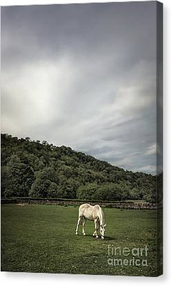 Pleasant Valley Sunday Canvas Print by Evelina Kremsdorf