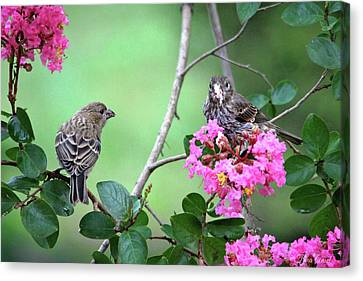Canvas Print featuring the photograph Please, May I Have Some? by Trina Ansel