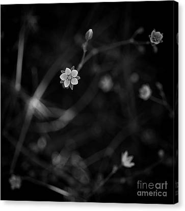 Existence Canvas Print - Please Notice Me.  by Masako Metz