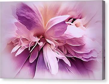 Plum Ballet Powder Puff Canvas Print by Darlene Kwiatkowski
