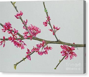 Plum Blossom Canvas Print by Glenda Zuckerman