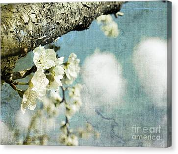 Plum Blossoms And Puffy Clouds Canvas Print by Cindy Garber Iverson