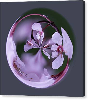 Canvas Print featuring the photograph Plum Tree Orb by Bill Barber