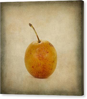 Plum Vintage Look Canvas Print by Bernard Jaubert