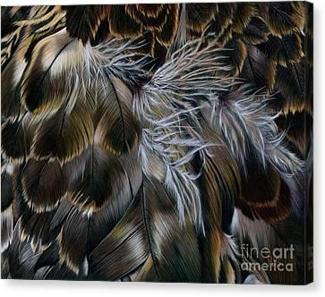 Plumas De Oro Canvas Print
