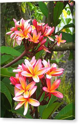Plumeria - Pink And Orange Canvas Print