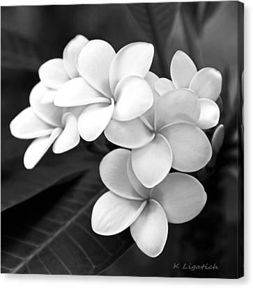 Black And White Florals Canvas Print - Plumeria - Black And White by Kerri Ligatich