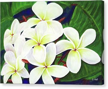 Plumeria Flower #289 Canvas Print by Donald k Hall