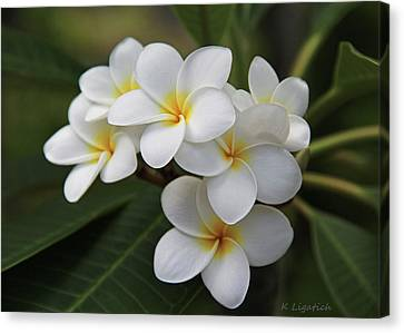 White Flower Canvas Print - Plumeria - Golden Hearts by Kerri Ligatich