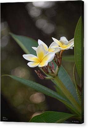 Plumeria II Canvas Print by Robert Meanor