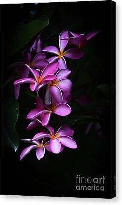 Canvas Print featuring the photograph Plumeria Light by Kelly Wade