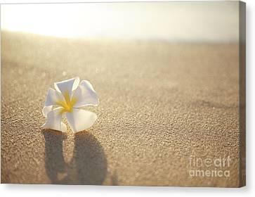 Plumeria On Beach I Canvas Print by Brandon Tabiolo - Printscapes