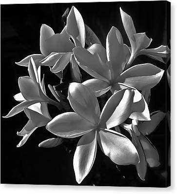 Plumeria Proper Evening Canvas Print by Gwyn Newcombe