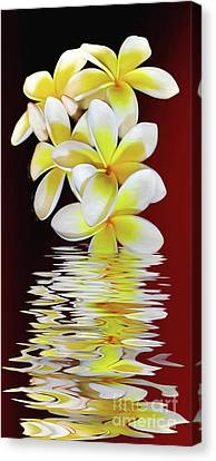 Plumeria Reflections By Kaye Menner Canvas Print