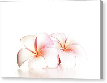 Canvas Print featuring the photograph Plumeria by Roger Mullenhour