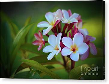 Canvas Print featuring the photograph Plumeria Sunset by Kelly Wade