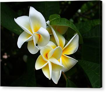 Canvas Print featuring the photograph Plumerias by Gary Cloud