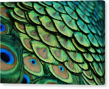 Plumes Canvas Print by Lorenzo Cassina