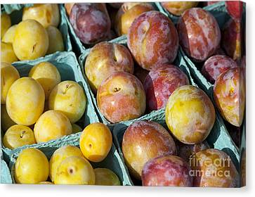 Plums Canvas Print by John Greim