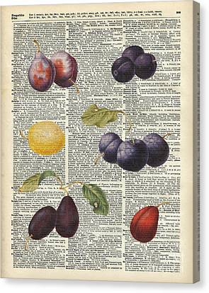 Plums Vintage Illustration Over A Old Dictionary Page Canvas Print by Jacob Kuch