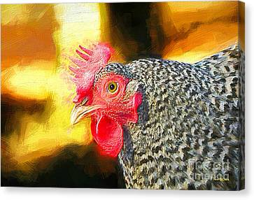 Plymouth Barred Rock Portrait Canvas Print