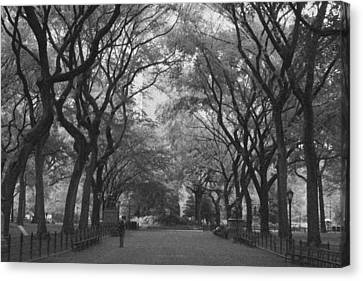 Poets Walk In Central Park Canvas Print