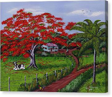 Poinciana Blvd Canvas Print by Luis F Rodriguez