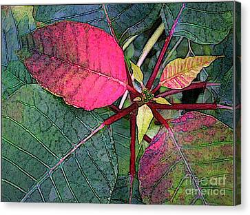 Poinsettia Watercolor Canvas Print