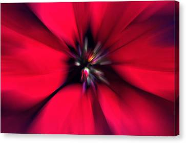Poinsettia Zoom Canvas Print by Steve Ohlsen