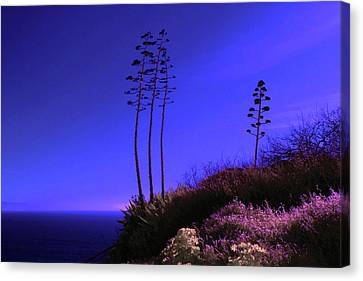 Canvas Print featuring the photograph Point Fermin In Infrared by Randall Nyhof