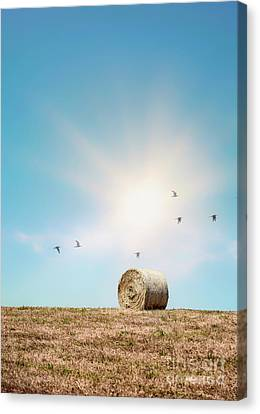 Point Of Light Canvas Print