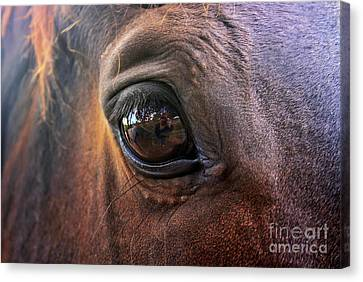 Canvas Print featuring the photograph Point Of View by Stephen Mitchell