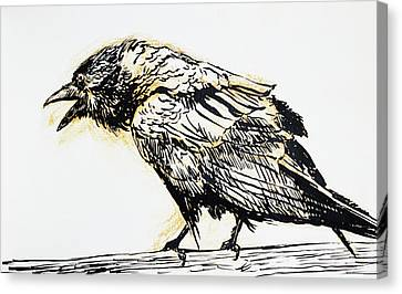 Raven Canvas Print - Point Reyes Raven by Tracie Thompson