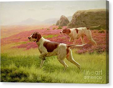 Pointers In A Landscape Canvas Print by Harrington Bird