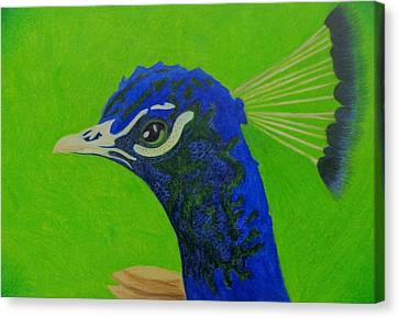 Poised Peacock  Canvas Print by Keely Keeney