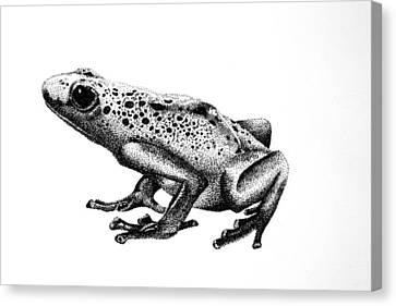 Poison Dart Frog Canvas Print by Rita Silva
