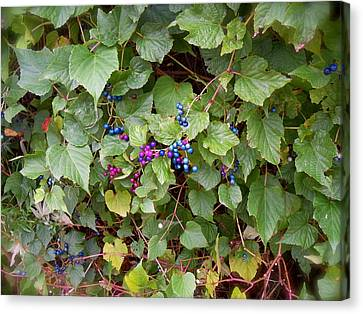 Poisonous Snozzberries Canvas Print by Jacqueline Cappadora