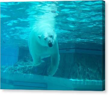 Polar Bear Coming At You Canvas Print by Brianna Thompson