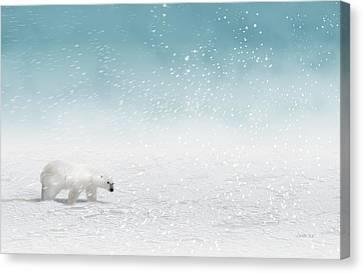Polar Bear In Snow Canvas Print by John Wills