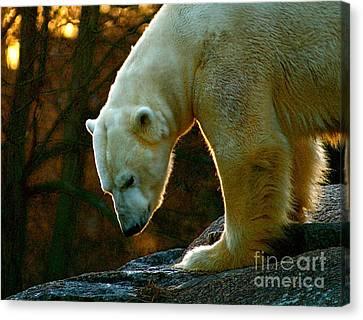 Canvas Print featuring the photograph Polar Bear by Louise Fahy