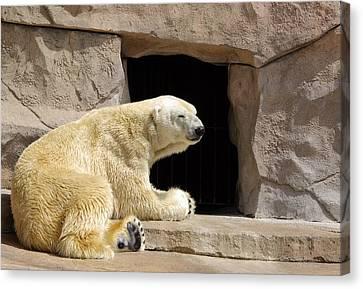 Polar Bear Prayers Canvas Print by Linda Mishler
