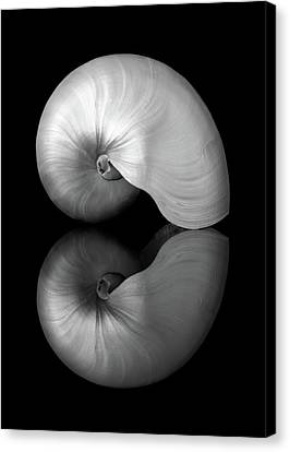 Polished Nautilus Shell And Reflection Canvas Print by Jim Hughes
